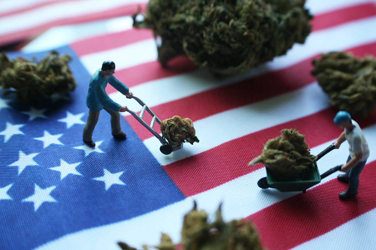 What Do Federal Regulations Mean for 2020's Hemp Crop — and Beyond?
