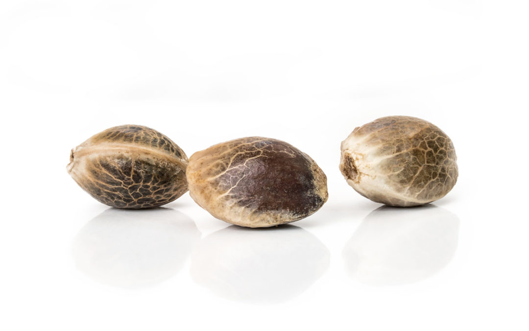3 Important Considerations When Choosing CBD Hemp Seed